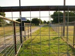 welded-wire-cattle-fence-farm